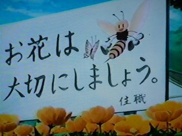Hachi_028